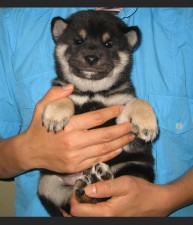 Akuto as a Puppy