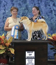 Beni wins Best of Breed
