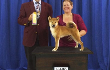 Ryu wins Reserve Best in Show