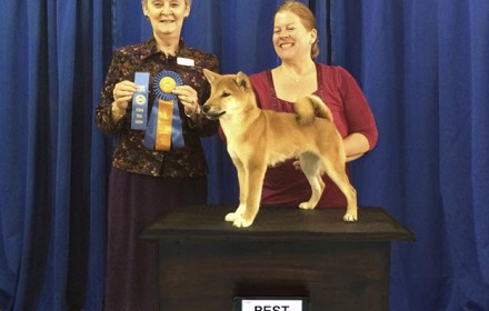 Ryu wins Best in Show