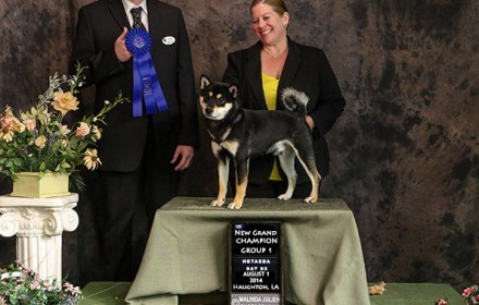Sire – Grand Champion. 2014 #4 Shiba in the US. Japanese Import.