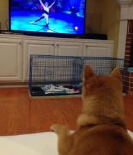 Loves Watching Dancers