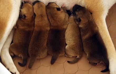 5 Little Munchkins