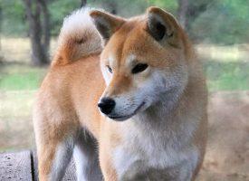 Yukiko ゆきこ