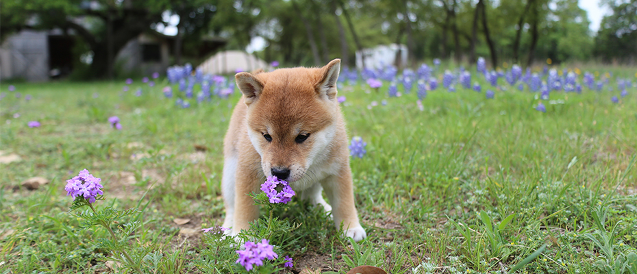 I'm Not a Fox